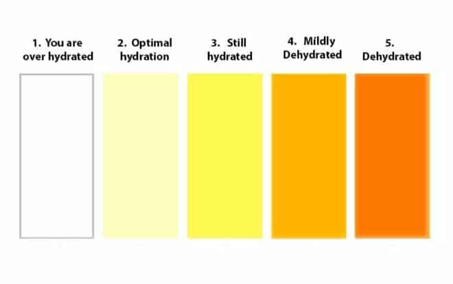 Warna urin yang terhidrasi baik
